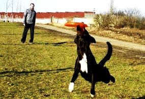 Chystáte se se psem na cvičák?